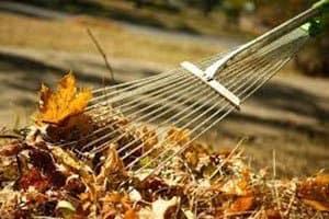 Fall leaf collection Nov. 6 – Dec. 29