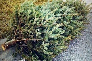 xmas-tree-collection