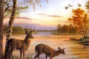 amem_deer-feeding
