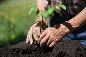 Tree Seedlings available for Residents