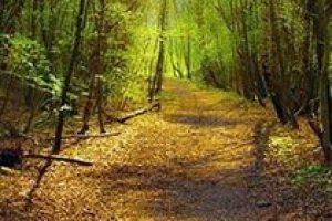 amem_autumn-path