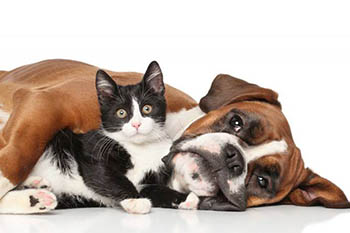 9/9: Paws Cause Fundraiser