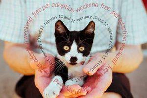 free-pet-adoption