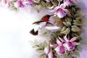 amem_hummingbird