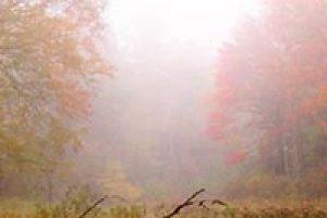 amem_autumn-mist