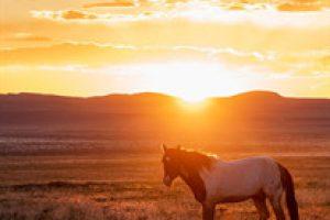 amem_horse_sunset