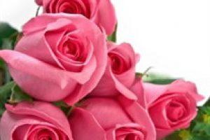amem_pinkroses
