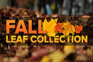 leaf-collection1