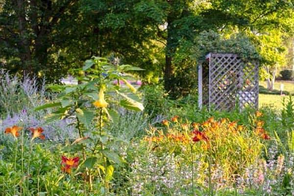 7/6: Annual NRV Garden Tour