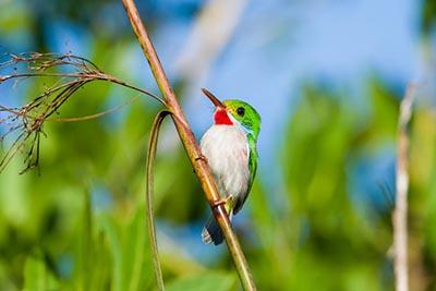 Winter birdwatching trips to Cuba planned