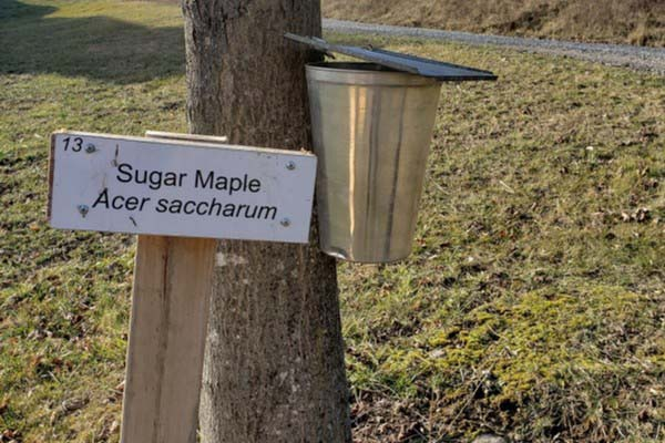 Sap to Syrup Weekend