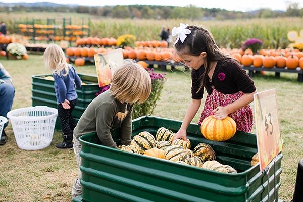 Sinkland Farms' Pumpkin Festival Celebrates 30 Years 15